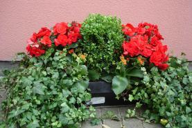 Emplacement Montage de fleurs et plantes - Assemblage de fleurs et plantes - Décorations