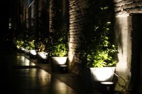 Emplacement plante décorative
