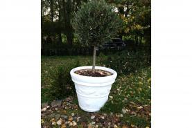 Emplacement Plante - Buis boule sur pied court - Buisson - Décoration