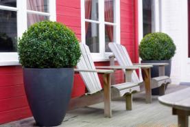 Emplacement Large gamme de buis - plante - décoration